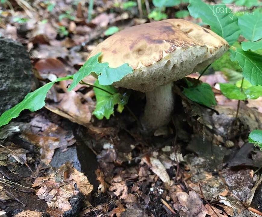 Закарпатці хваляться грибами, які знайшли в Оріховицях, біля Ужгорода: фото, фото-5