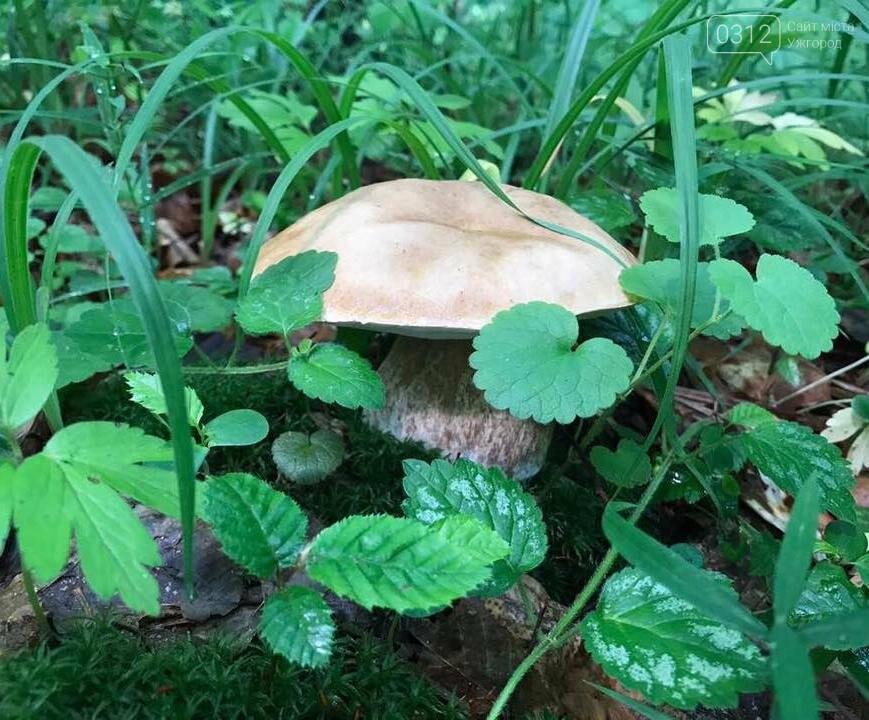 Закарпатці хваляться грибами, які знайшли в Оріховицях, біля Ужгорода: фото, фото-1