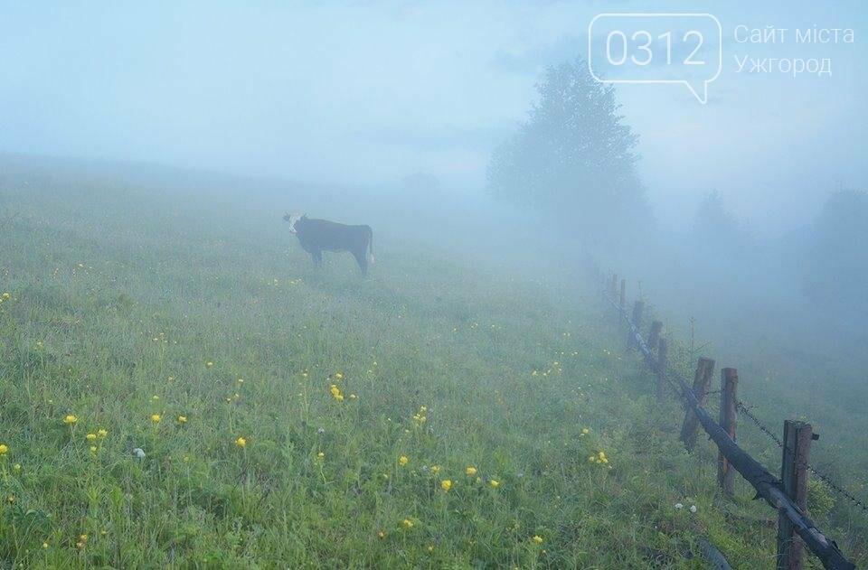 Краса Карпат: фотографії ужгородки з подорожі Чорногорою та Горганами, фото-11