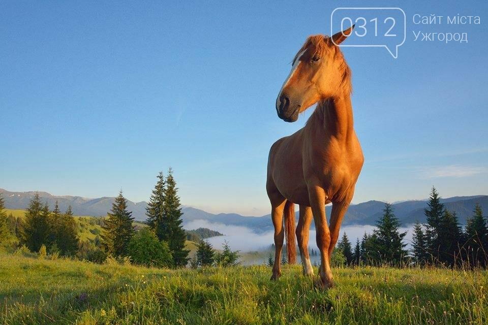 Краса Карпат: фотографії ужгородки з подорожі Чорногорою та Горганами, фото-10
