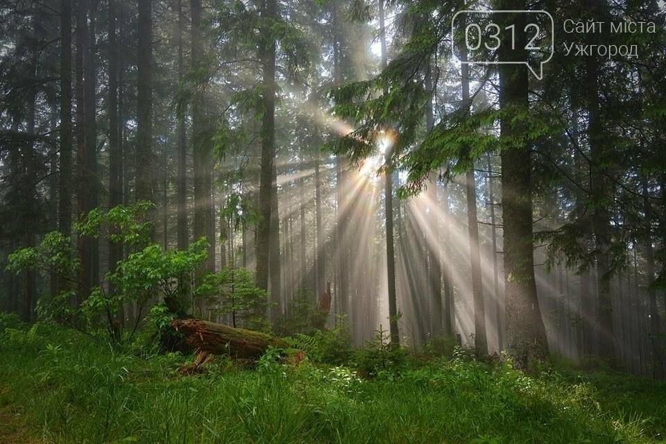 Краса Карпат: фотографії ужгородки з подорожі Чорногорою та Горганами, фото-14