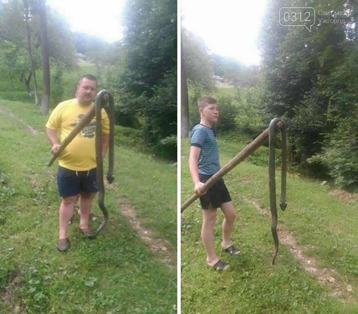 Мешканці Тячівського району полюють на двометрових змій: фото, фото-1