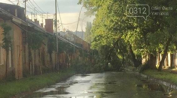 Гроза на Закарпатті: в Ужгороді падали дерева, на Воловеччині змило дорогу: фото, фото-1