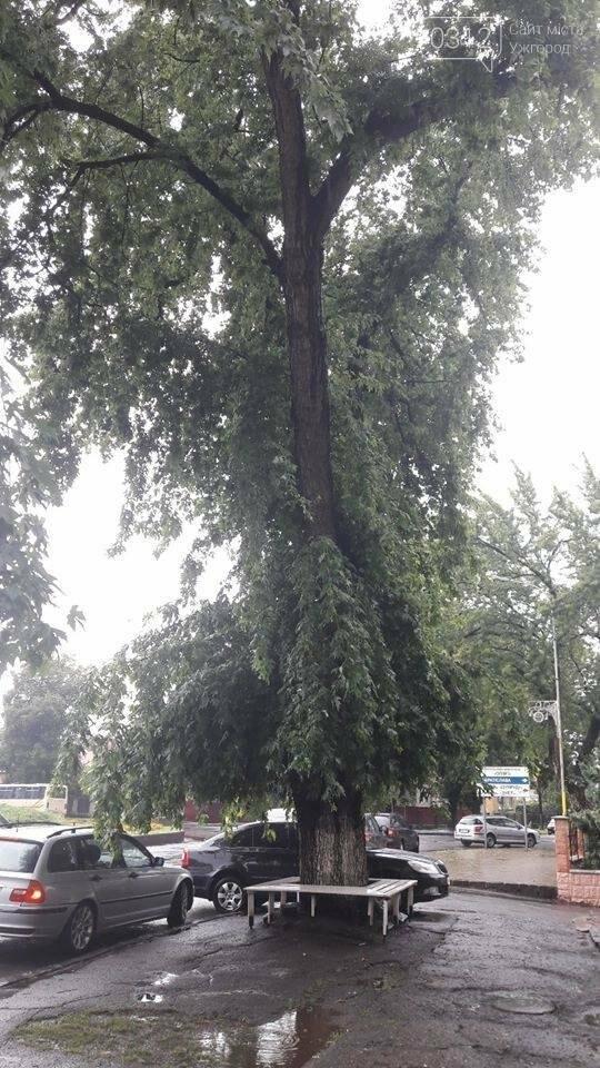На Дружби народів в Ужгороді буде новий тротуар, а деякі дерева зріжуть: фото, фото-2