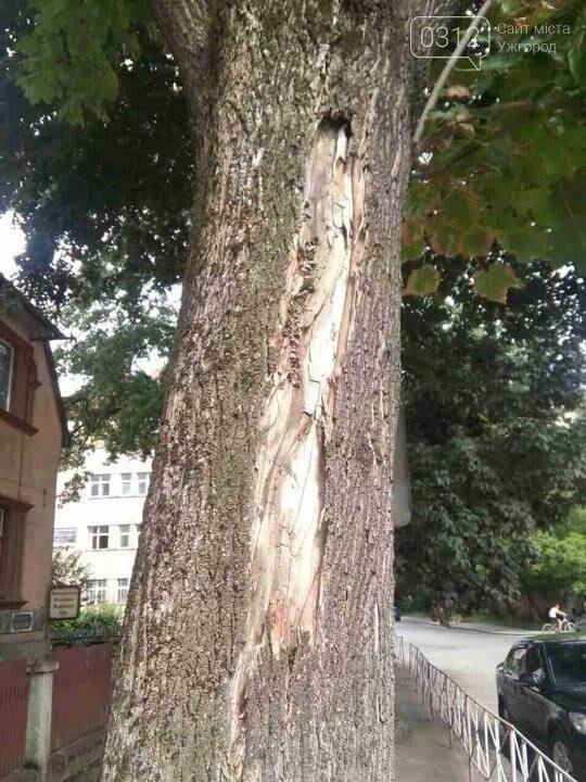 На Дружби народів в Ужгороді буде новий тротуар, а деякі дерева зріжуть: фото, фото-1