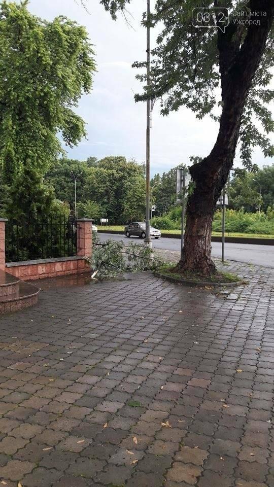 На Дружби народів в Ужгороді буде новий тротуар, а деякі дерева зріжуть: фото, фото-4