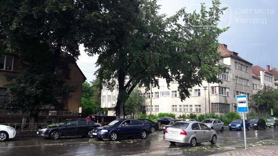 На Дружби народів в Ужгороді буде новий тротуар, а деякі дерева зріжуть: фото, фото-3