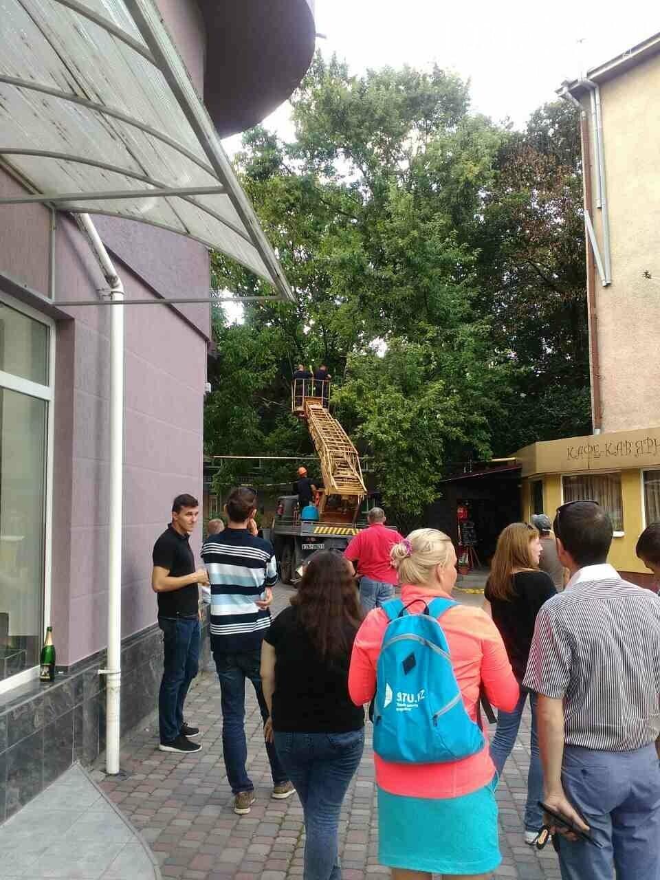 В Ужгороді на Швабській дерево упало на газопровід: фото, фото-1