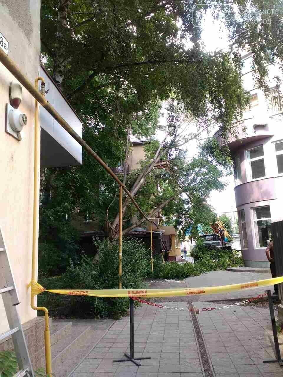 В Ужгороді на Швабській дерево упало на газопровід: фото, фото-3