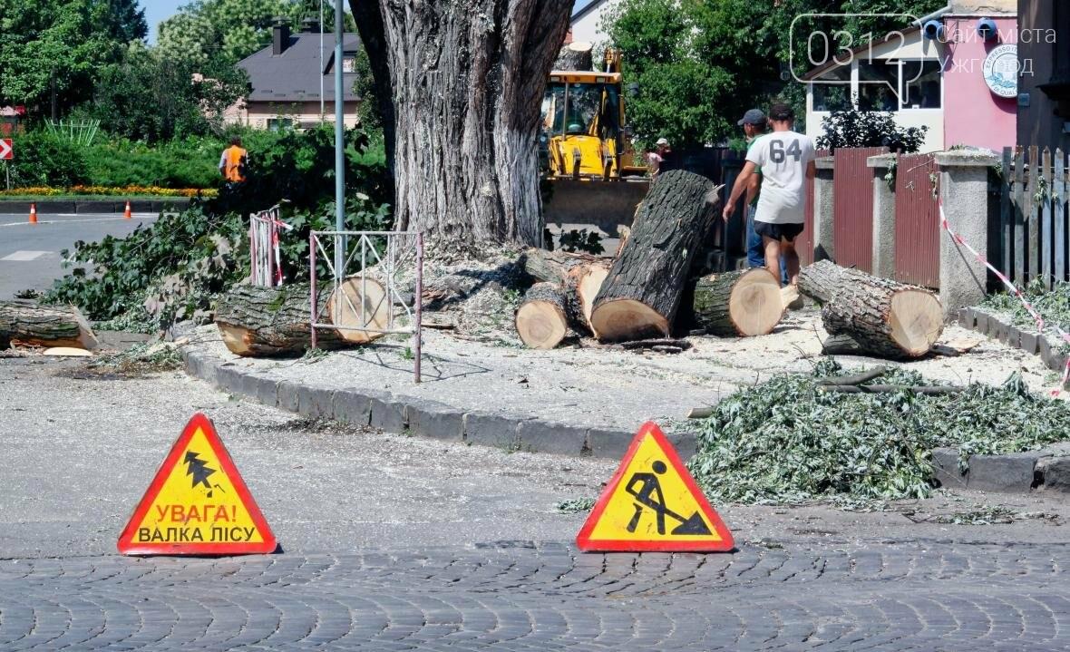 Як на площі Дружби Народів дерева зрубували: фоторепортаж, фото-1