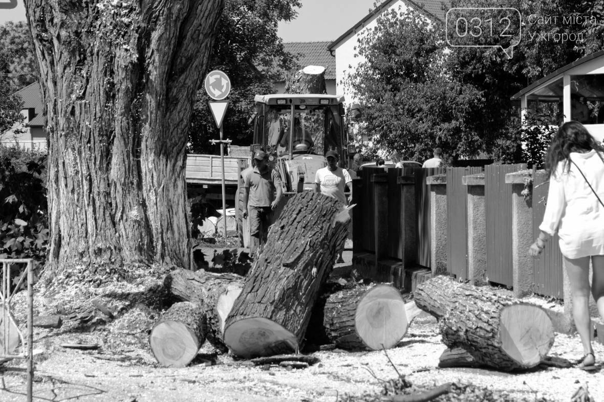 Як на площі Дружби Народів дерева зрубували: фоторепортаж, фото-12