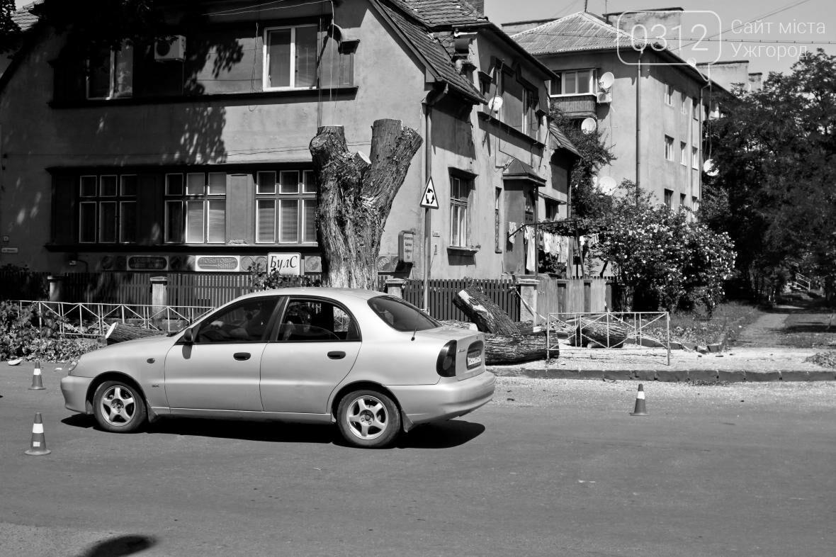Як на площі Дружби Народів дерева зрубували: фоторепортаж, фото-3
