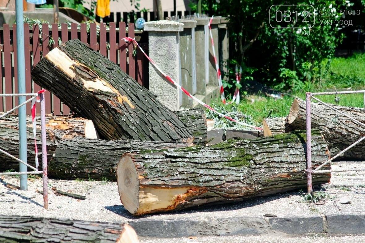 Як на площі Дружби Народів дерева зрубували: фоторепортаж, фото-2