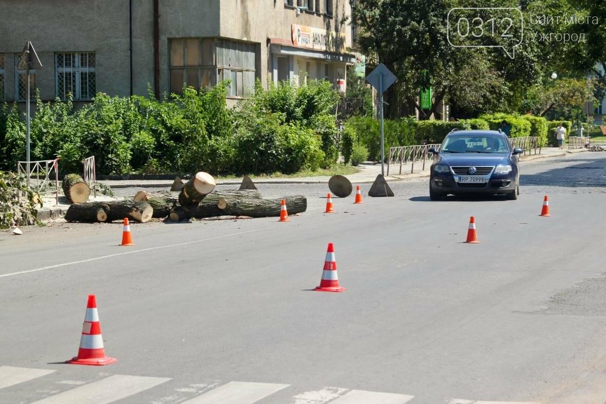 Як на площі Дружби Народів дерева зрубували: фоторепортаж, фото-11