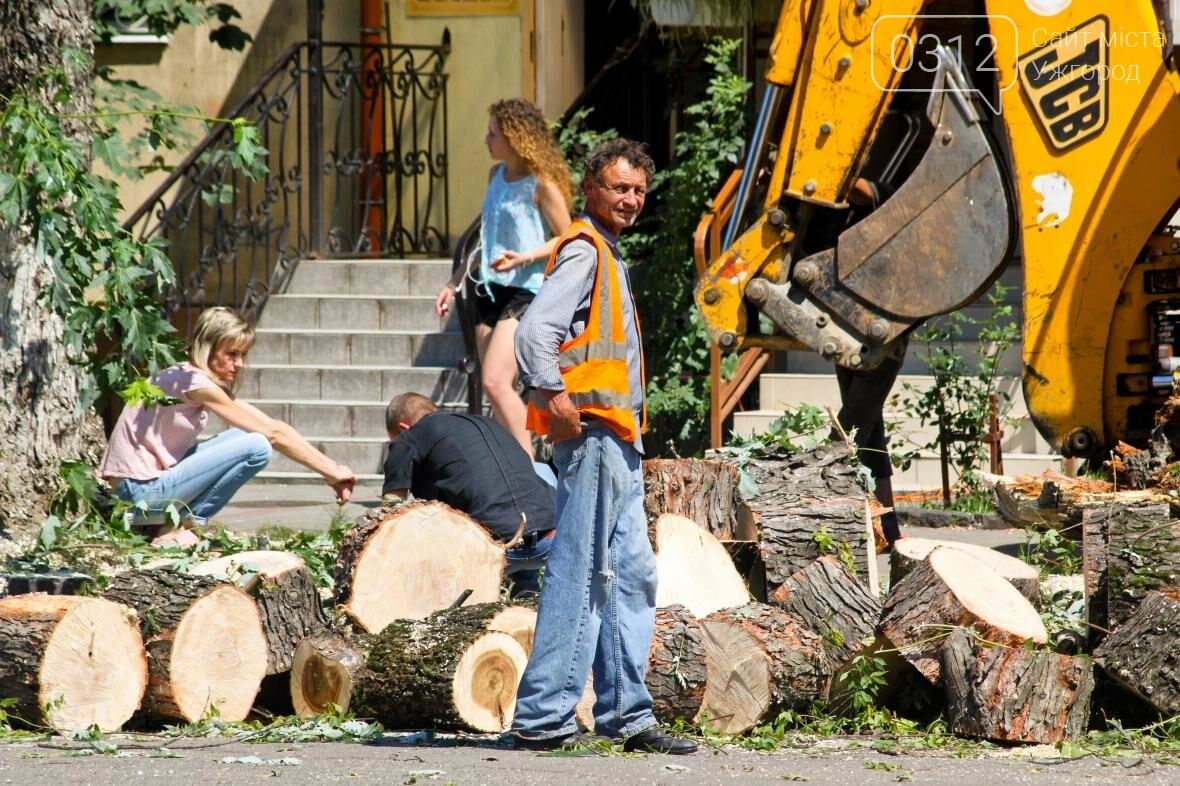 Як на площі Дружби Народів дерева зрубували: фоторепортаж, фото-7