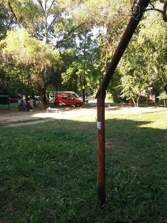 """В Ужгороді біля """"Проліска"""" кабель, що живить світлом багатоповерхівки, держиться на вербі: фото, фото-4"""