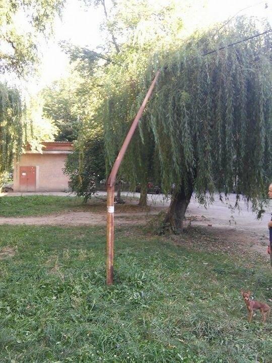 """В Ужгороді біля """"Проліска"""" кабель, що живить світлом багатоповерхівки, держиться на вербі: фото, фото-2"""