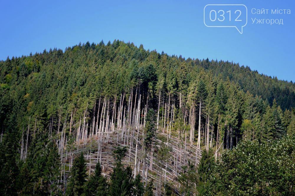 Лісівники опублікували фото жахливого бурелому на Закарпатті, фото-3
