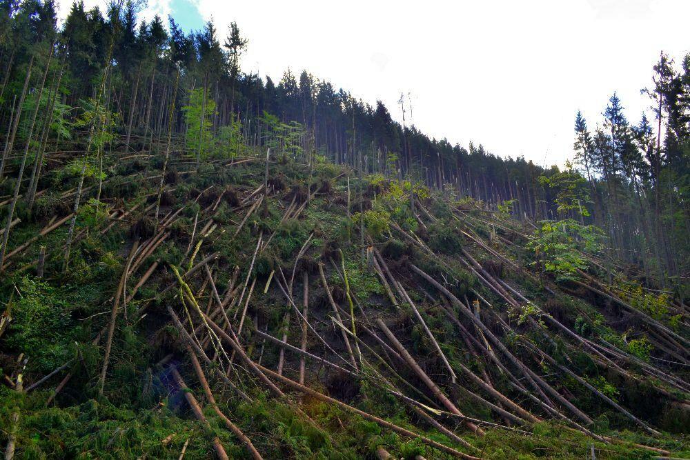 Лісівники опублікували фото жахливого бурелому на Закарпатті, фото-4