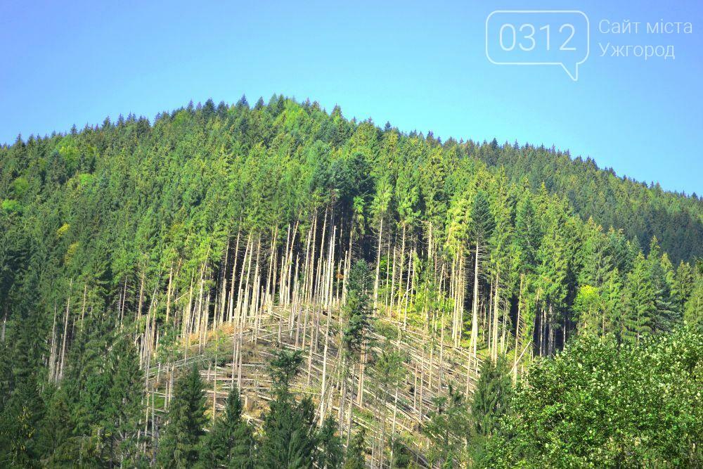 Лісівники опублікували фото жахливого бурелому на Закарпатті, фото-2