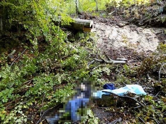 У лісі на Міжгірщині на 31-річного чоловіка впало спиляне дерево: він загинув на місці (ФОТО), фото-1