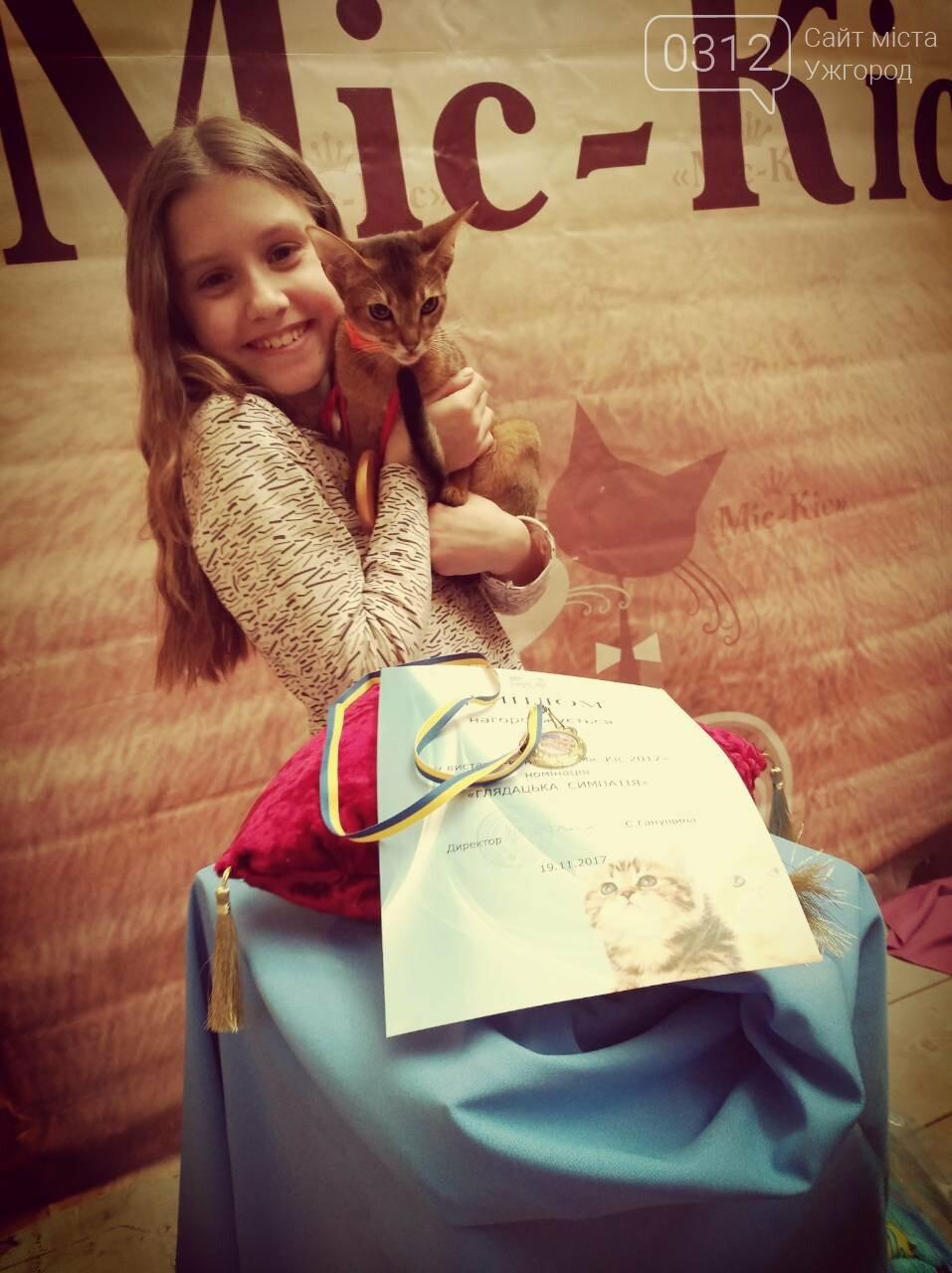 """""""Міс-кіс"""" 2017 в Ужгороді: 30 кішок, історія сфінкса Джозера та комунікабельна абісинська (ФОТОРЕПОРТАЖ), фото-12"""