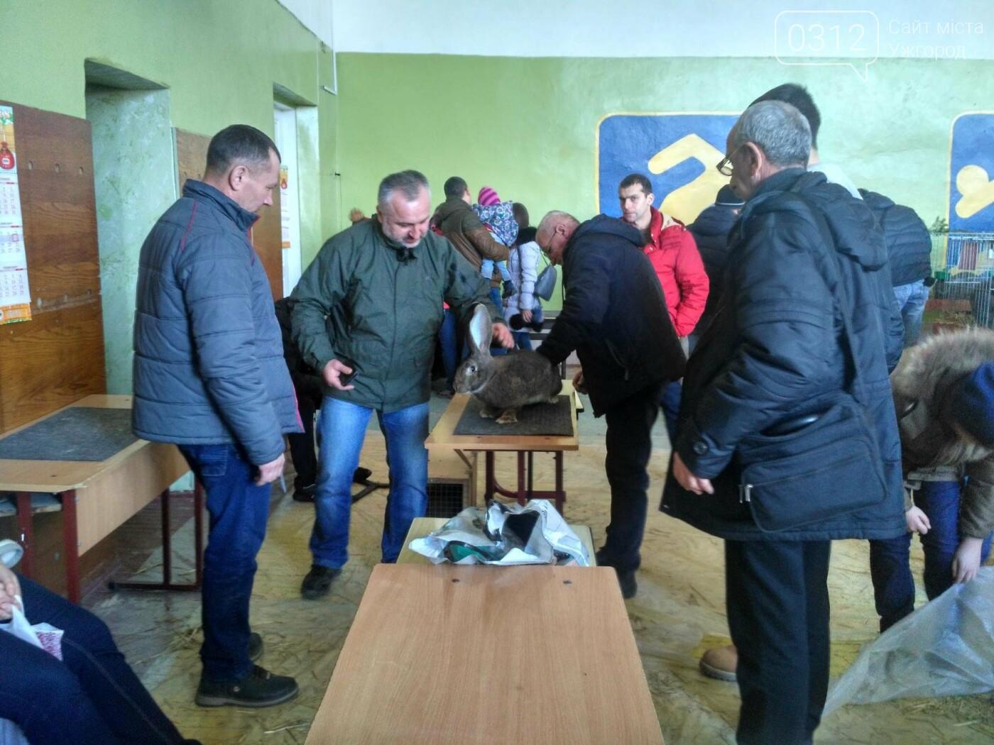 В Ужгороді пройшов 7-й традиційний показ за участі понад 200 елітних кроликів (ФОТОРЕПОРТАЖ), фото-6