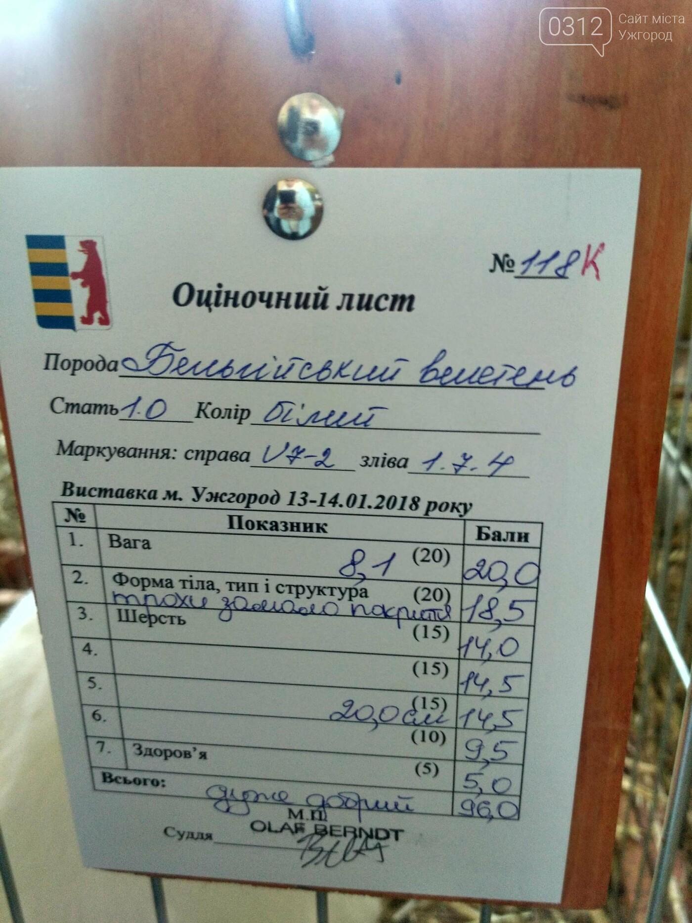 В Ужгороді пройшов 7-й традиційний показ за участі понад 200 елітних кроликів (ФОТОРЕПОРТАЖ), фото-20