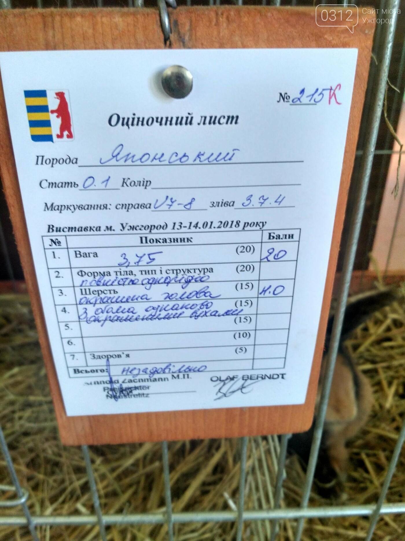 В Ужгороді пройшов 7-й традиційний показ за участі понад 200 елітних кроликів (ФОТОРЕПОРТАЖ), фото-15