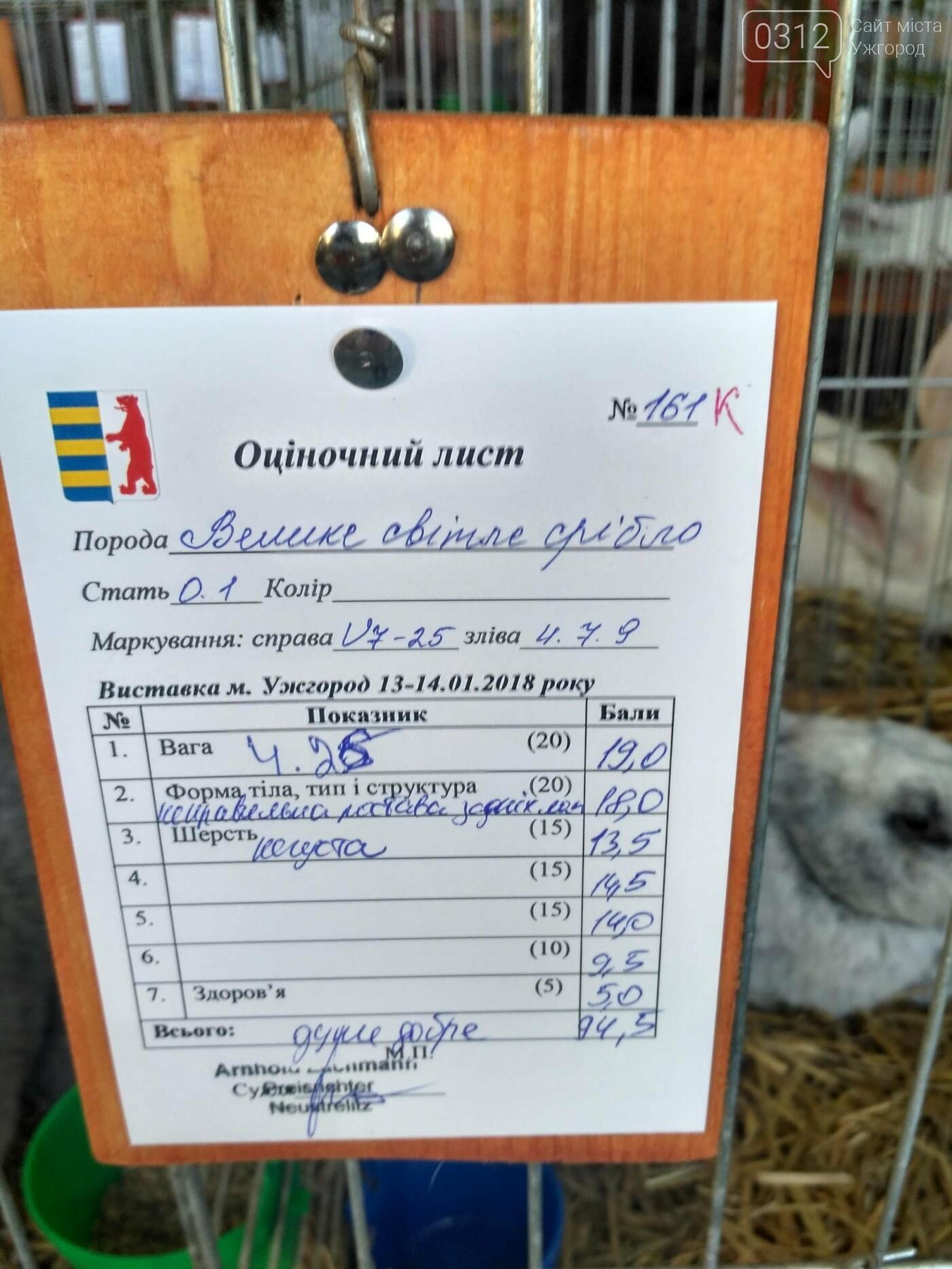 В Ужгороді пройшов 7-й традиційний показ за участі понад 200 елітних кроликів (ФОТОРЕПОРТАЖ), фото-12