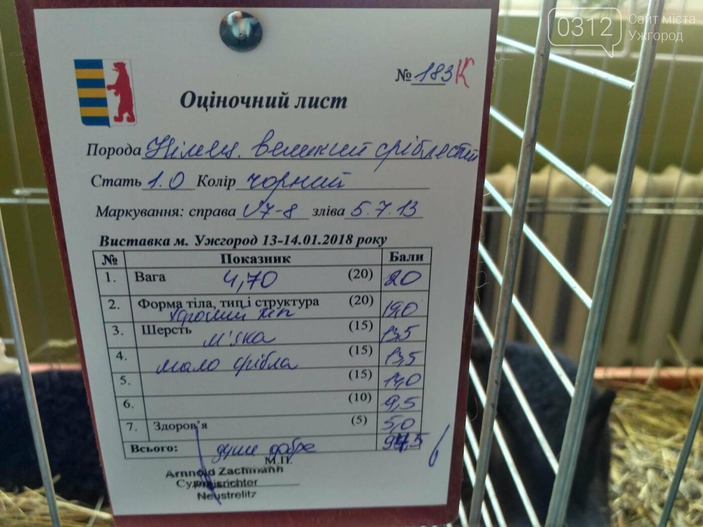 В Ужгороді пройшов 7-й традиційний показ за участі понад 200 елітних кроликів (ФОТОРЕПОРТАЖ), фото-13