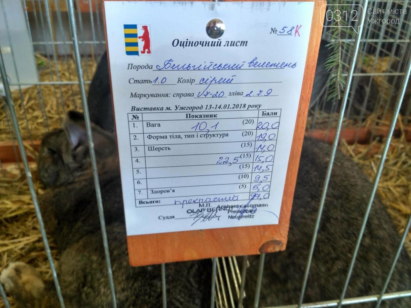 В Ужгороді пройшов 7-й традиційний показ за участі понад 200 елітних кроликів (ФОТОРЕПОРТАЖ), фото-21