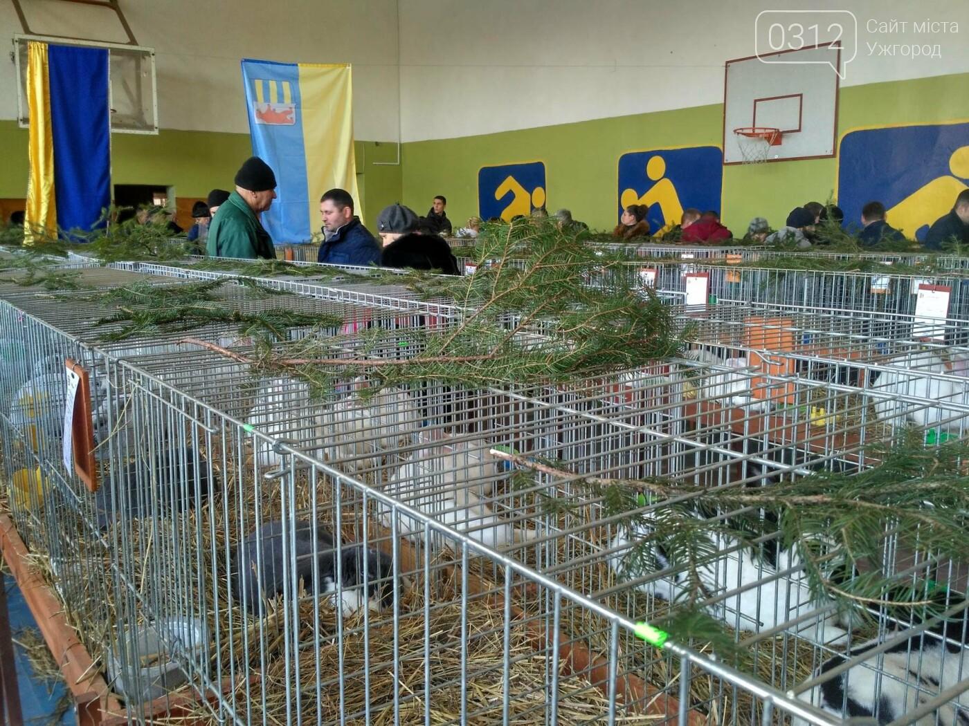 В Ужгороді пройшов 7-й традиційний показ за участі понад 200 елітних кроликів (ФОТОРЕПОРТАЖ), фото-1