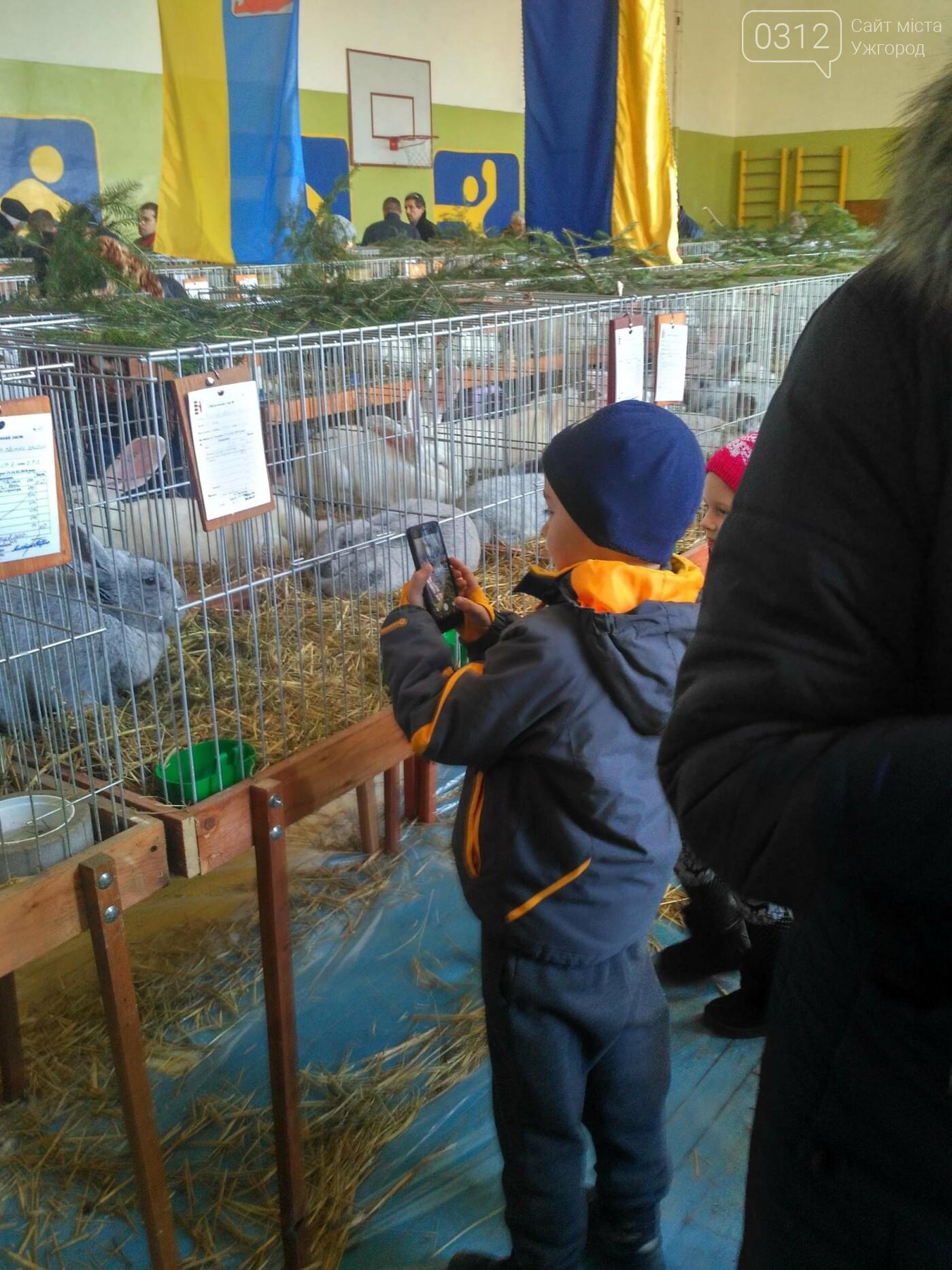 В Ужгороді пройшов 7-й традиційний показ за участі понад 200 елітних кроликів (ФОТОРЕПОРТАЖ), фото-19