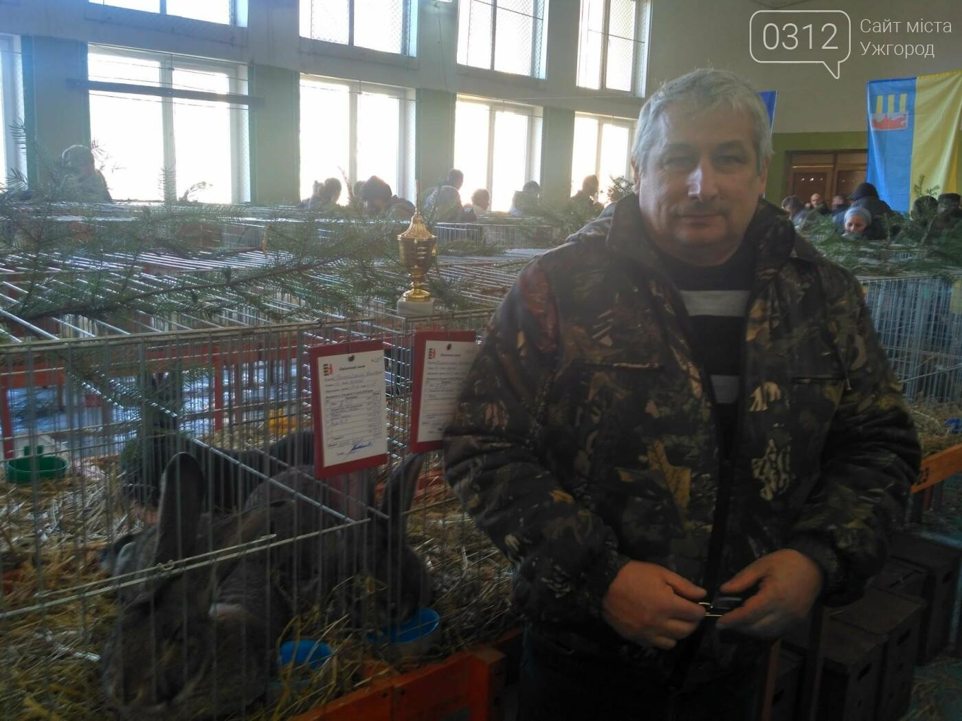 В Ужгороді пройшов 7-й традиційний показ за участі понад 200 елітних кроликів (ФОТОРЕПОРТАЖ), фото-9