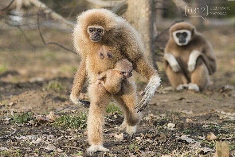 Що треба знати, плануючи візит у зоопарк Ніредьгази в Угорщині (ЦІНИ ТА ГРАФІК РОБОТИ), фото-1