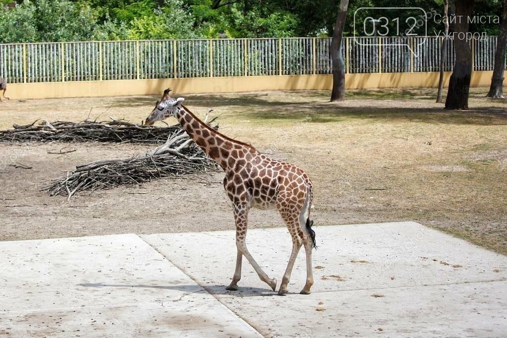 Що треба знати, плануючи візит у зоопарк Ніредьгази в Угорщині (ЦІНИ ТА ГРАФІК РОБОТИ), фото-9