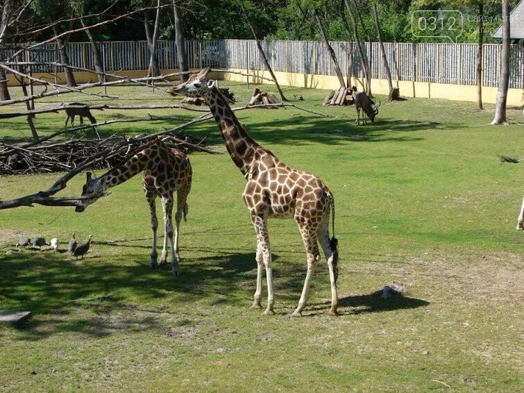 Що треба знати, плануючи візит у зоопарк Ніредьгази в Угорщині (ЦІНИ ТА ГРАФІК РОБОТИ), фото-10