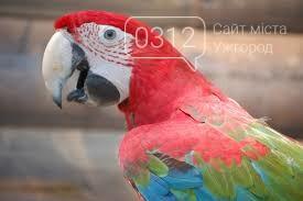 Що треба знати, плануючи візит у зоопарк Ніредьгази в Угорщині (ЦІНИ ТА ГРАФІК РОБОТИ), фото-6