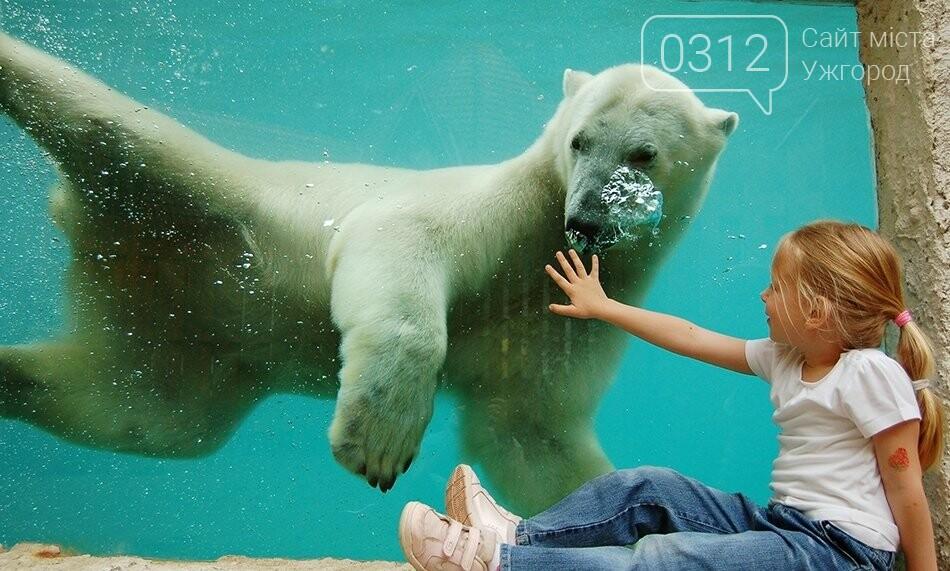 Що треба знати, плануючи візит у зоопарк Ніредьгази в Угорщині (ЦІНИ ТА ГРАФІК РОБОТИ), фото-12