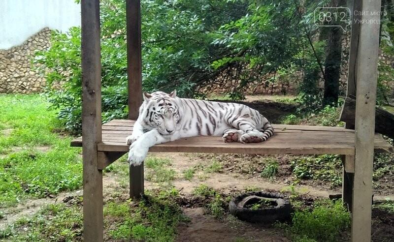 Що треба знати, плануючи візит у зоопарк Ніредьгази в Угорщині (ЦІНИ ТА ГРАФІК РОБОТИ), фото-3