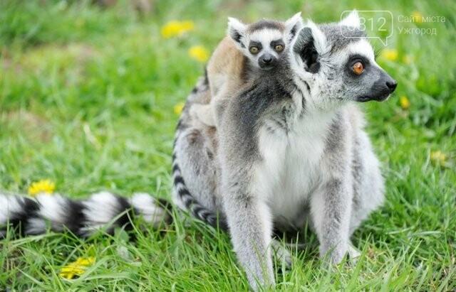 Що треба знати, плануючи візит у зоопарк Ніредьгази в Угорщині (ЦІНИ ТА ГРАФІК РОБОТИ), фото-11