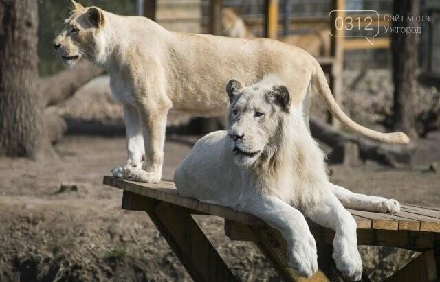 Що треба знати, плануючи візит у зоопарк Ніредьгази в Угорщині (ЦІНИ ТА ГРАФІК РОБОТИ), фото-2