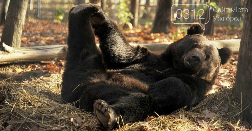 Що треба знати, плануючи візит у зоопарк Ніредьгази в Угорщині (ЦІНИ ТА ГРАФІК РОБОТИ), фото-4