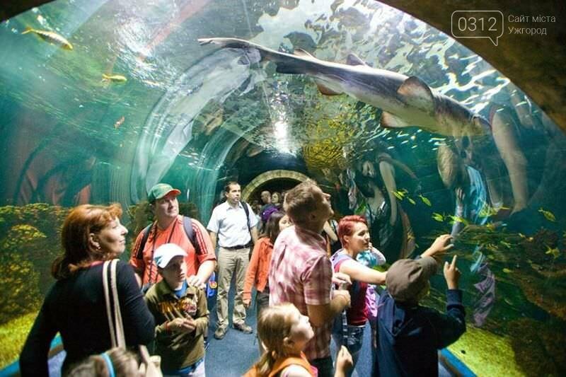 Що треба знати, плануючи візит у зоопарк Ніредьгази в Угорщині (ЦІНИ ТА ГРАФІК РОБОТИ), фото-7