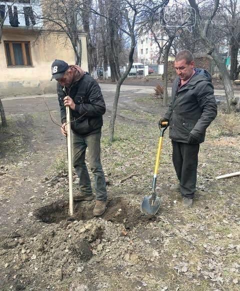 В Ужгороді на Станційній та Одеській вулицях висадили 50 дерев - сакур та лип (ФОТО), фото-2