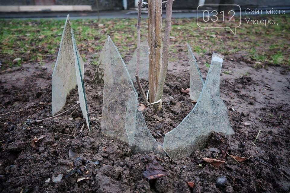 Вбивча огорожа дерев: ужгородцям варто слідкувати за своїми дітьми та собаками (ФОТО), фото-2