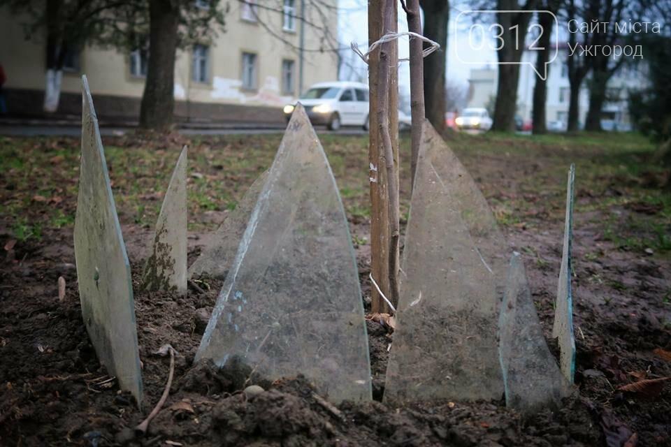 Вбивча огорожа дерев: ужгородцям варто слідкувати за своїми дітьми та собаками (ФОТО), фото-1