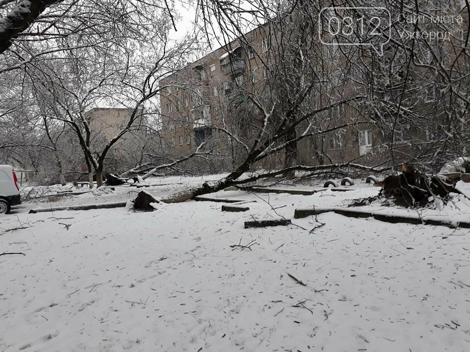 У Виноградові шквальний вітер повалив дерева (ФОТО), фото-7
