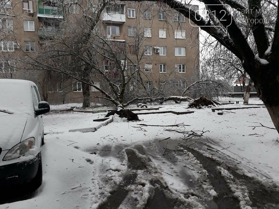 У Виноградові шквальний вітер повалив дерева (ФОТО), фото-8